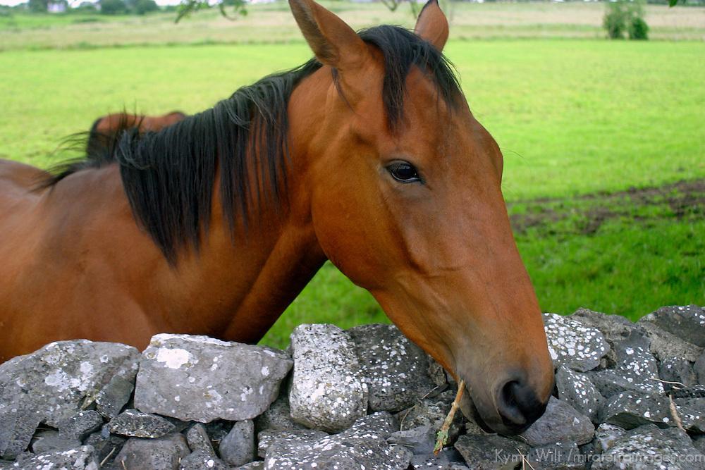 Europe, Ireland. Farm horses of Ireland.
