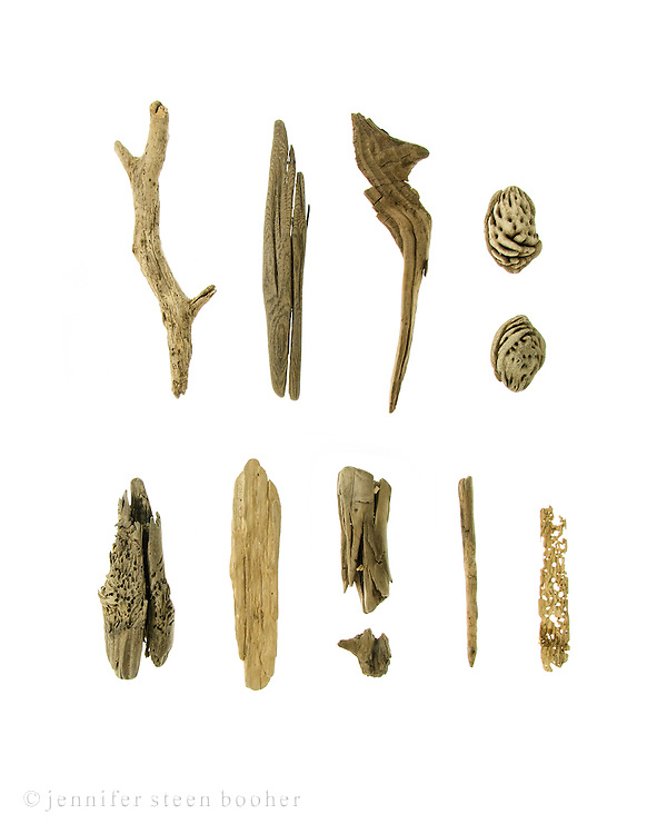 Eleven pieces of Maine driftwood on a white background.
