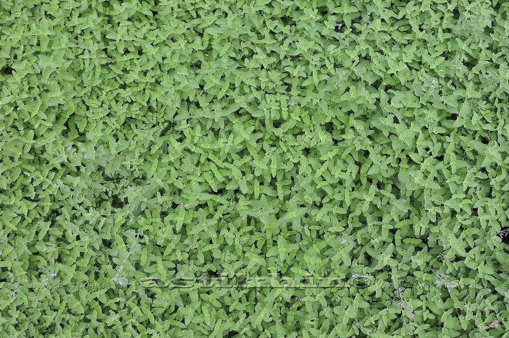 Close-up of green grass field.