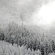SHOT 4/8/2007 - Images of Telluride, Co. including Telluride scenics and images of the heavy spring snowfall in the Umcompaghre National Forest and Sheep Mountain near Telluride. A bird flies through the air as a shaft of sunlight pierces the heavy cloud cover after an evening dusting of spring snow left the trees around Telluride covered the next morning..(Photo by Marc Piscotty © 2007)