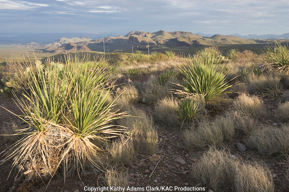 View from Sotol Vista, of the Chihuahuan Desert, Big Bend National Park, Texas.