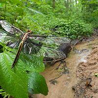 Carolina Rainforest