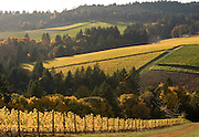 Bella Vida Vineyard, Dundee Hills, Willamette Valley, Oregon