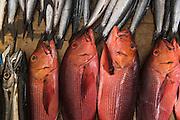 Red Snapper &amp; Barracuda<br /> Coral Reef Species for sale<br /> Suva Sea Food Market<br /> Suva<br /> Viti Levu<br /> Fiji. <br /> South Pacific