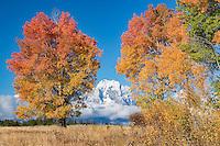 Mount Moran during autumn in Grand Teton National Park
