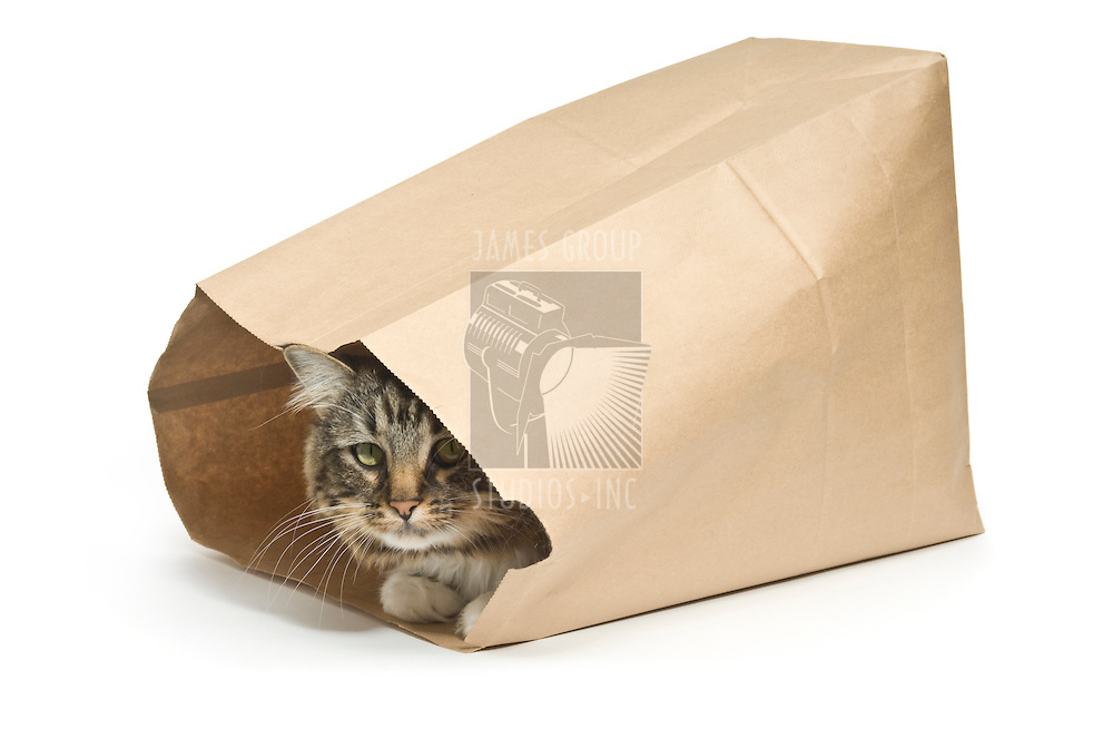 "Tabby cat inside a paper bag illustrating a guarded secret from the saying ""the cat's in the bag"""