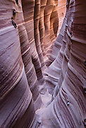 Zebra Slot Canyon, Grand Staircase Escalante National Monument, Utah, USA. Directions to unmarked trailhead for Zebra and Tunnel Slot Canyons: From Escalante town, drive 6 miles east on Highway 12, turn right on Hole-in-the-Rock Road, drive 7.8 miles to the third cattle guard and park on west side of road. Hike east on well-trodden but unmarked path, 5 miles round trip to Zebra Slot, plus an optional 3 miles round trip to Tunnel Slot (750 feet gain over 8 miles), using map from GSENM Visitor Center or canyoneeringusa.com. The image was stitched from 2 overlapping photos to increase depth of focus.
