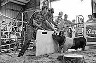 Photos taken at the Waushara County Fair, Wautoma Wisconsin Saturday, Aug. 16, 2014,