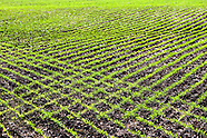 Farm Crops: Agricultural Stock Images