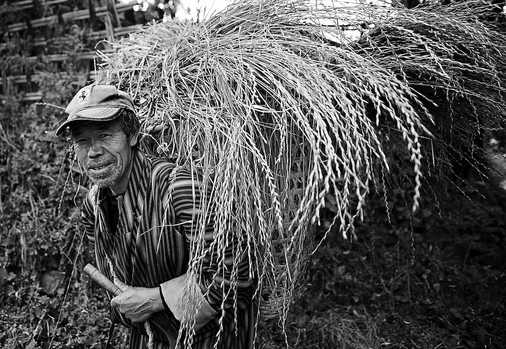 A man in a rural mountain village in Bhutan return home with fodder for the livestock.