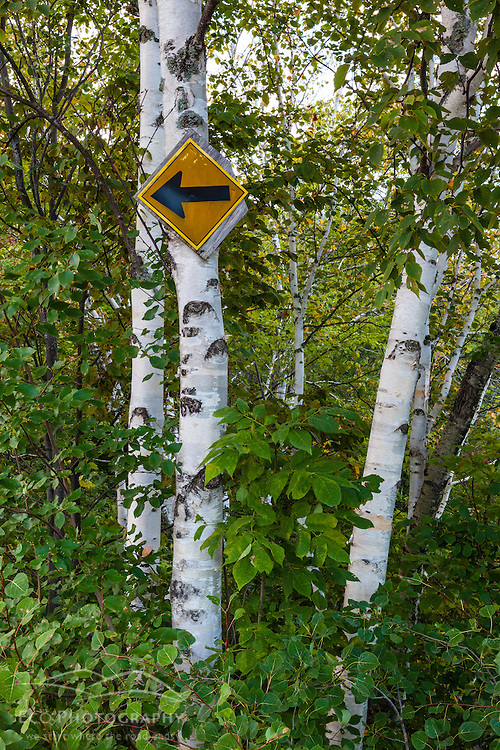 A trail sign on paper birch trees along the International Appalachian Trail near the north entrance to Baxter State Park.