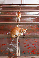 Cats inspect gold fish in Shanghai zoo, China