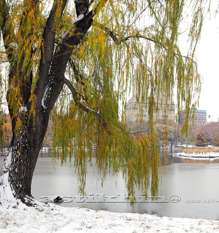 First snow in Manhattan
