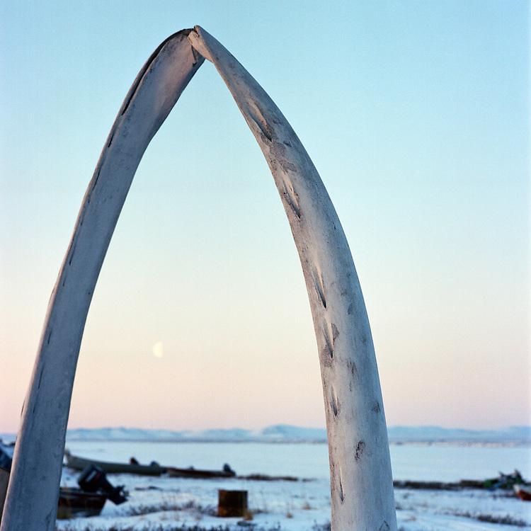 KIVALINA, ALASKA - 2007: Whale Bones.