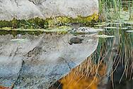 Conata Basin, Buffalo Gap National Grassland, South Dakota<br /> <br /> -Swift fox, and with killed prairie dogs<br /> -prairie landscape at sunrise<br /> -badlands landscape at sunset<br /> <br /> Yellowstone National Park, Wyoming<br /> -Mallard ducks and green-wing teal (?) in wetland