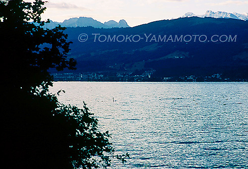 In early morning, the top of rugged  alpine peaks above the hills on the west bank of Lake Zurich, Switzerland are  visible in the morning sun. Swans and ducks in the water add to the photo.  Shot from Männedorf, Switzerland.
