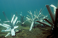 Newly placed FishHiding structures on the lake bottom.<br />