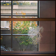 2016, Richard Walker, Seattle, WA, USA, Instagram, Apple, phone, iPhone, app, window, tree, October, autumn, fall, view, wall,