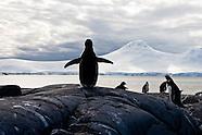Antarctica stories