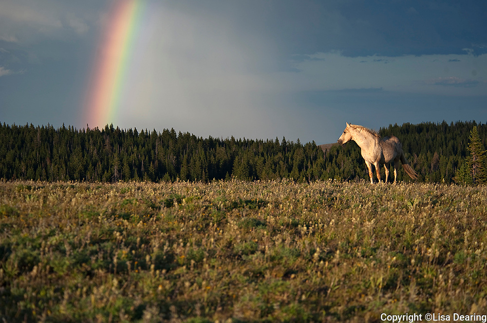 The Stallion Cloud, Pryor Mountain, Montana