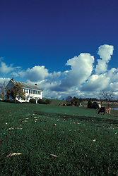 farm house with cattle grazing in front yard