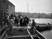 1959 - Lobster Fishing Boats from Carna, Galway arrive at Ringsend, Dublin