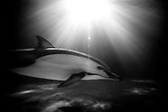 """The Last Dolphin"""