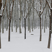 Mid-March Snow in Chaoyang park, Beijing.