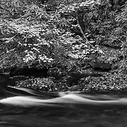 Bald River Small Cascade - Great Smoky Mountains TN - Black & White