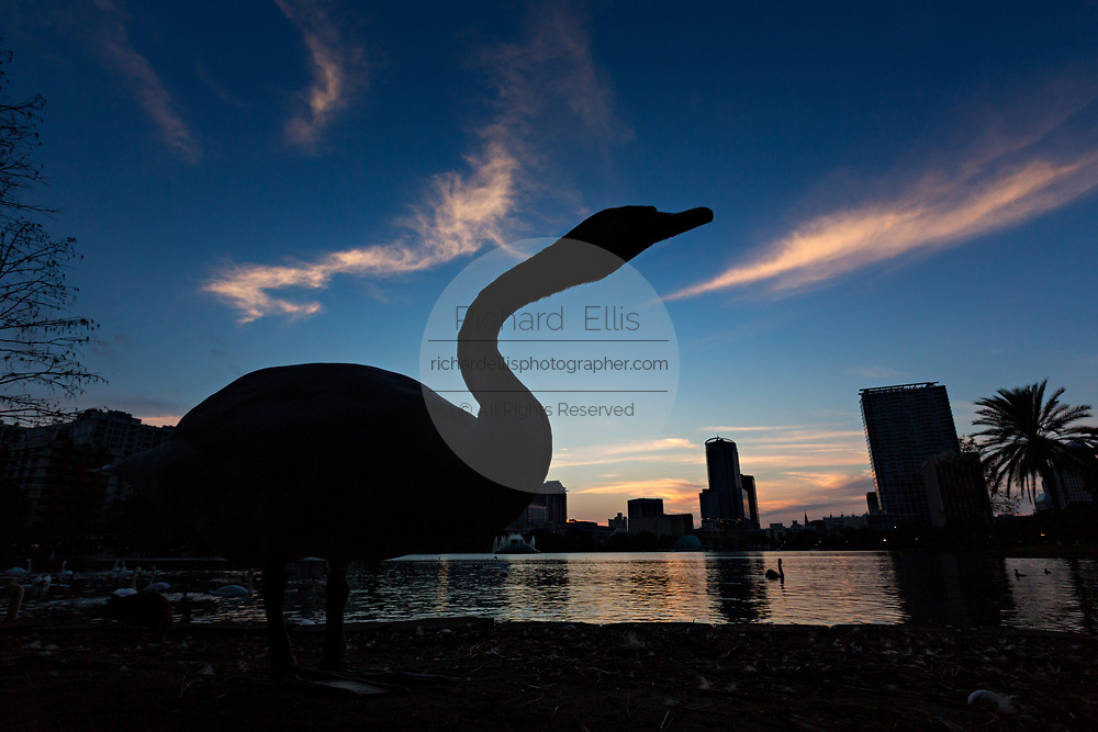 A swan is silhouetted by the setting sun and skyline view over Lake Eola in Orlando, Florida. Lake Eola Park is located in the heart of Downtown Orlando and home to the Walt Disney Amphitheater.