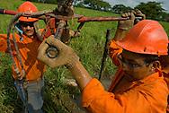 Obreros taladran uno de los lugares escogidos para la búsqueda de petróleo. Una vez ubicado un lugar propicio para la búsqueda del petróleo, se prosigue con el uso de la sísmica para intentar localizar los lugares exactos en los cuales se debería perforar. El petróleo es el principal producto de exportación de Venezuela, es por esto que, las industria petrolera y petroquímica son la base de la economía venezolana.   Workers drilling a place, as part of the exploratory search. The oil is the main product of exportation of Venezuela, in this respect, oil and petrochemical industry are the base of the Venezuelan economy. (Ramón Lepage/ Orinoquiaphoto) -- Ciertas restricciones aplican-- / Istmophoto