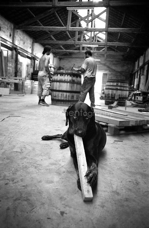 Paf the dog enjoying a piece of oak while its master Marc Kennel and nephew Yohan work in the background.