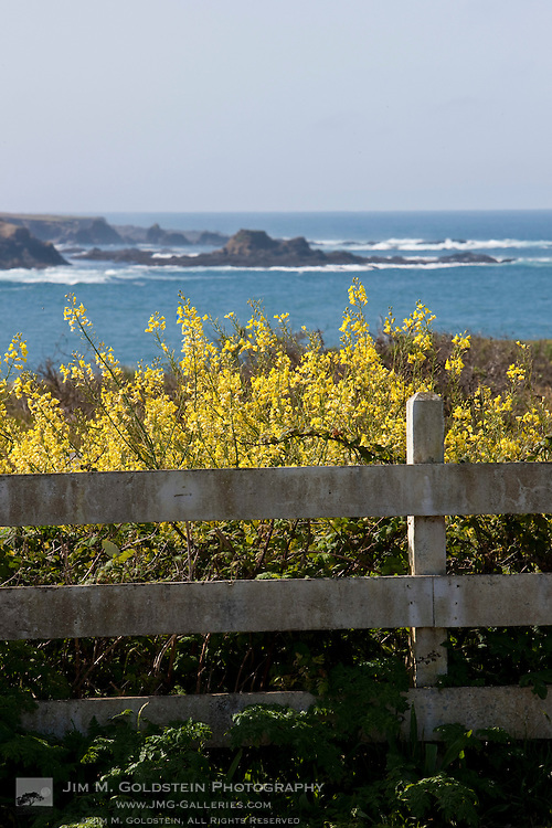 Wildflowers behind a fence along Main Street in downtown Mendocino, California