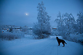 The Blue Hour - Winter