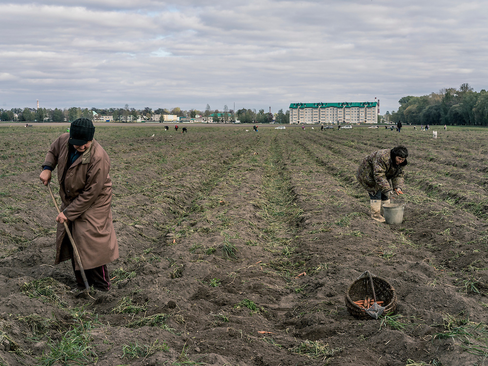 Collective farm workers harvest carrots on Sunday, October 11, 2015 in Babruysk, Belarus. The town has been proposed to house a new Russian air base, though whether that will happen is questionable. President Alexander Lukashenko, a longtime iron-fisted ruler of Belarus, was elected to a fifth term with a reported 83.5% of the vote, which international monitors said did not meet democratic standards.