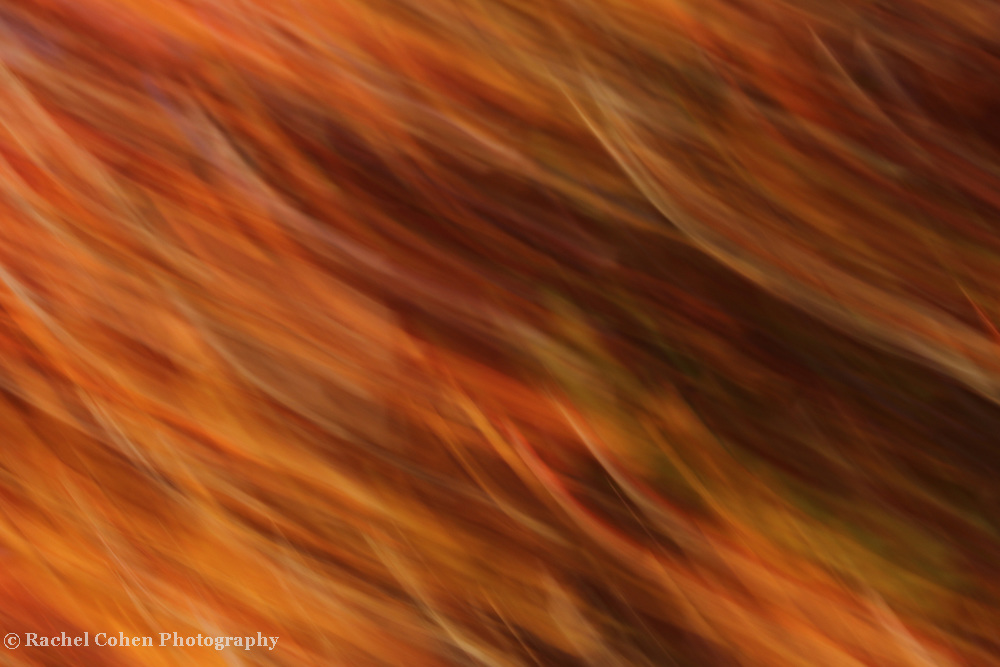 &quot;Luminosity&quot; <br /> <br /> Wonderful strands of orange, gold, amber, and brown in an abstract!