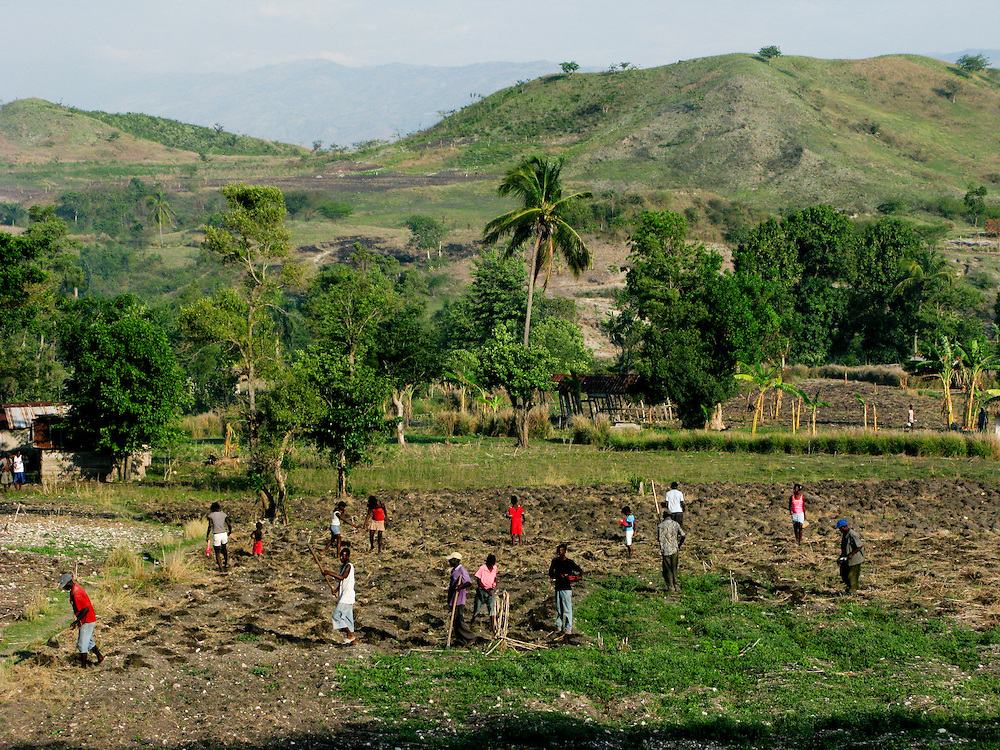 Workers plant a field.