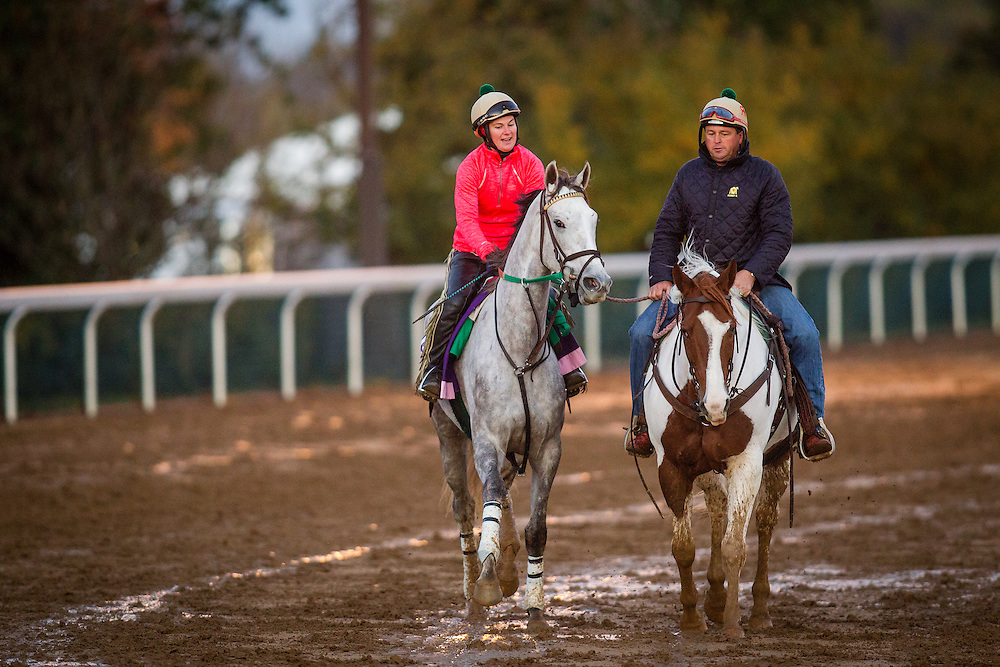 October 29, 2015:  Tap to It, trained by Ralph E. Nicks and owned by Whisper Hill Farm, LLC, exercises in preparation for the The 14 Hands Winery Breeders' Cup Juvenile Fillies at Keeneland Race Track in Lexington, Kentucky. Alex Evers/ESW/CSM