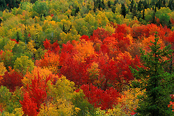 Lookout Ledge, Baxter SP, ME. Blazing fall colors in Baxter's Wassataquoik Valley. Northern Hardwood Forest.