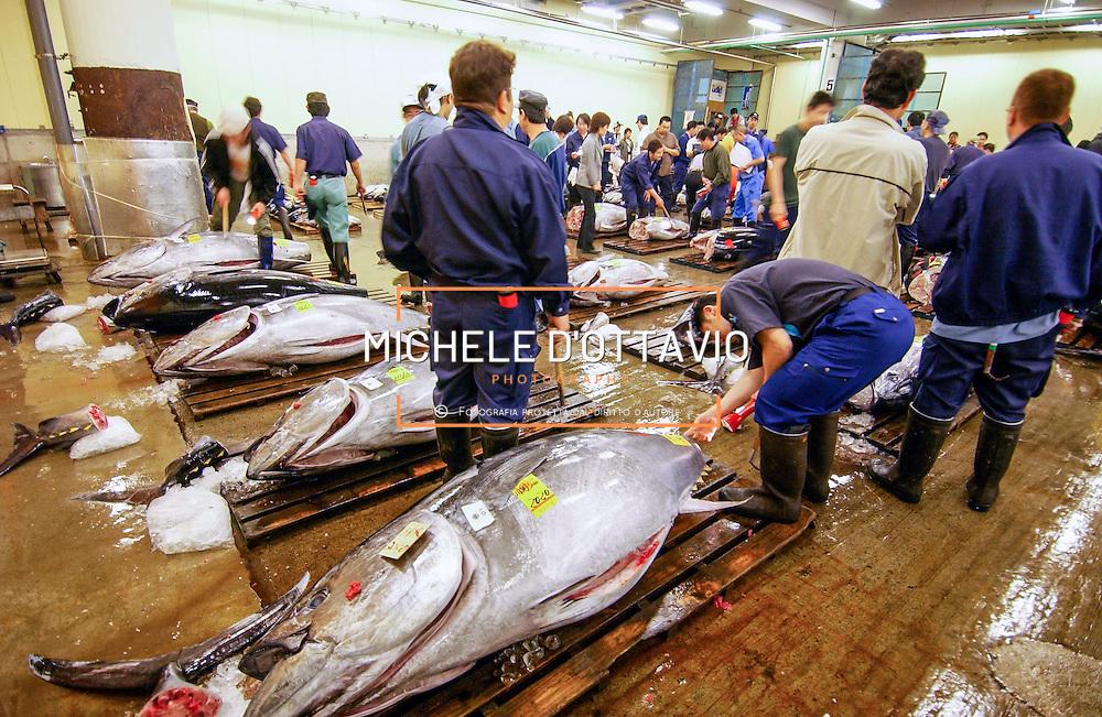 Japan, Tokyo,  Fresh Tuna Auction at Tsukiji Fish Market.<br /> Asta del tonno fresco.