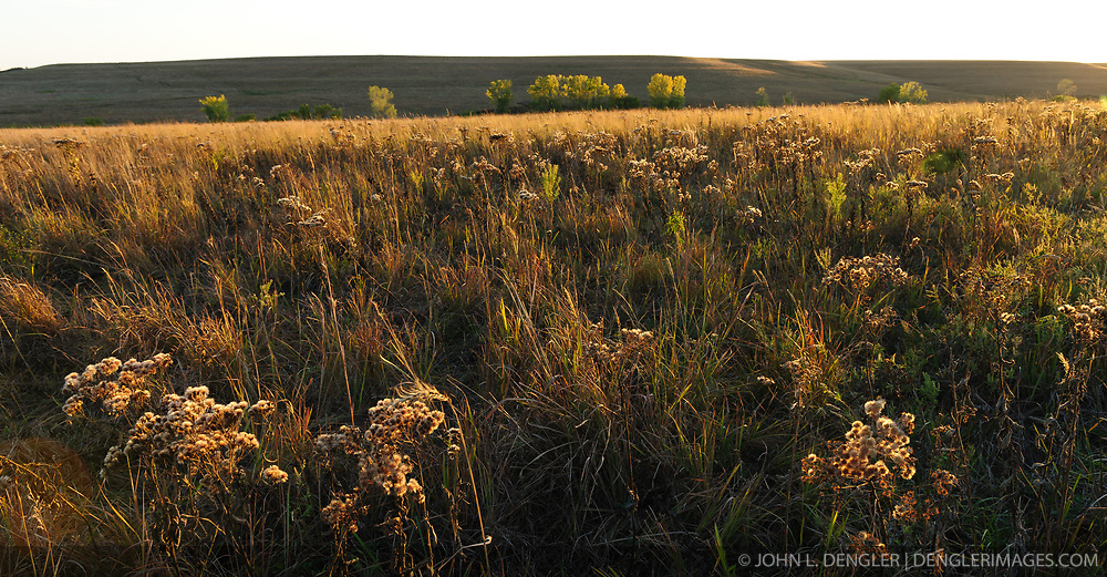 The dry remains of the flower heads of aster wildflowers and other prairie grasses and plants light up during a fall sunset at the Tallgrass Prairie National Preserve. The 10,894-acre Tallgrass Prairie National Preserve is located in the Flint Hills of Kansas in Chase County near the towns of Strong City and Cottonwood Falls. Less than four percent of the original 140 million acres of tallgrass prairie remains in North America. Most of the remaining tallgrass prairie is in the Flint Hills in Kansas. Tallgrass Prairie National Preserve is the only unit of the National Park Service dedicated to the preservation of the tallgrass prairie ecosystem. The Tallgrass Prairie National Preserve is co-managed with The Nature Conservancy.