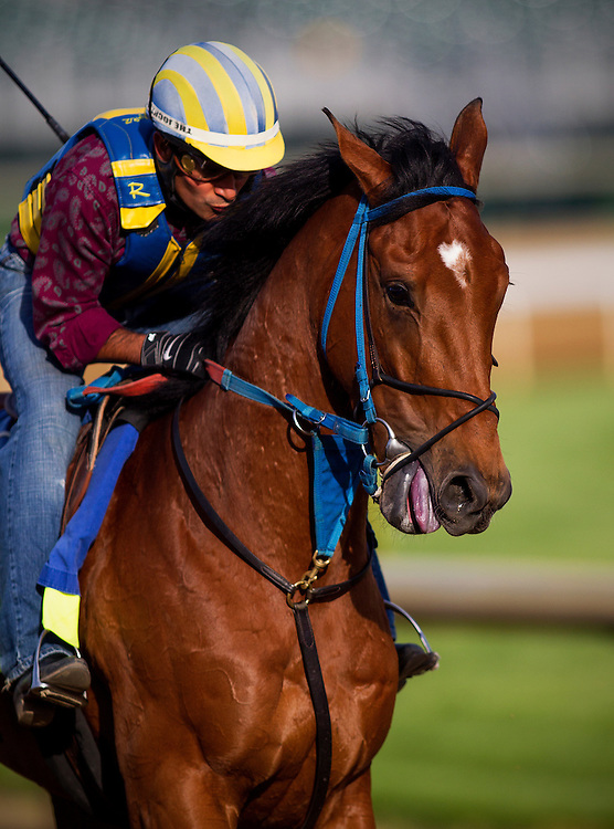Kentucky Derby contender Vyjack gallops at Churchill Downs in Louisville, KY on May 02, 2013. (Alex Evers/ Eclipse Sportswire)