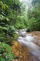 A rainforest stream in montane forest, Mount Kinabalu, Sabah, Malaysia