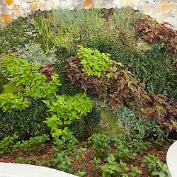 PLANT WALL - DIA