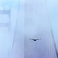 Foggy Flight, Golden Gate Bridge, San Francisco, CA