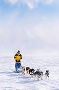 Alaska. Iniakuk Lake. Dog musher enjoys an outing with Brooks Range in background. MR. Digitally Manipulated.