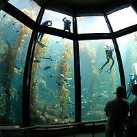 Monterey Bay Aquarium California United States&amp;#xA;&copy; KIKE CALVO - V&amp;W&amp;#xA;( zoo captivity education divers volunteers cleaning maintenance<br />