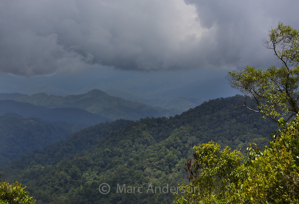 Tropical thunderstorm above hills covered in virgin rainforest. Pahang province, Malaysia