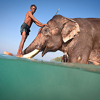 Man stands on tusks of the famous elephant Rajan