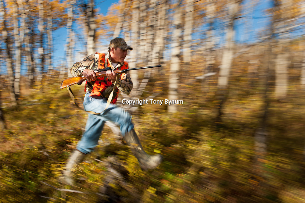 fall hunter in hunter orange,  running though aspen forest with rifle, motion action hunting